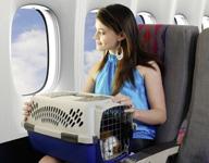 Besonderheiten bei der Mitnahme von Tieren in die Vereinigten Staaten